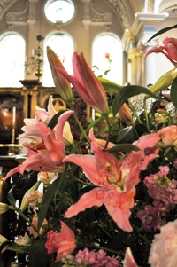 pink lilies 2