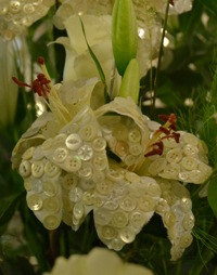 lilies with pearls on